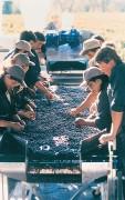 MONTECRISTO: Montes Wines