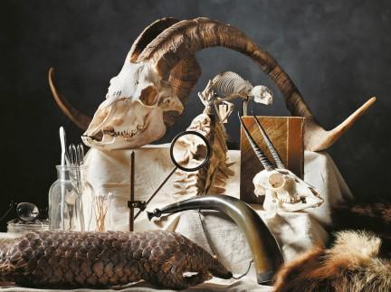 MONTECRISTO Magazine: Beaty Biodiversity Museum