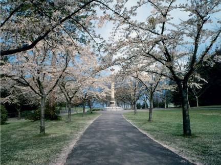 MONTECRISTO Magazine: Vancouver's Historic Street Trees