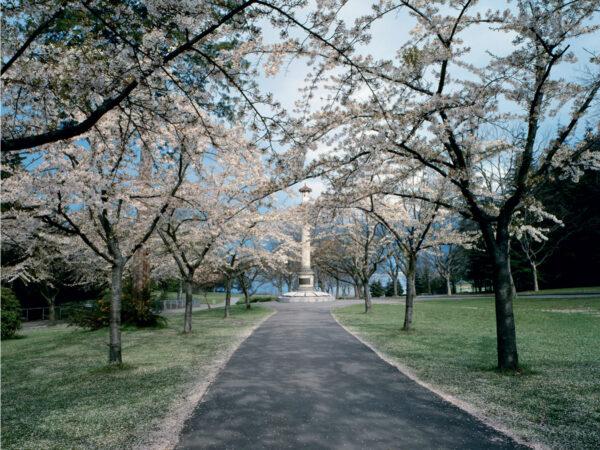 Plum Trees Vs Cherry Trees How To Tell Vancouver Cherry Blossom Festival Vancouver Cherry Blossom Festival