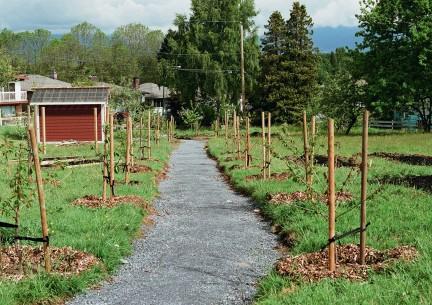 MONTECRISTO: Copley Community Orchard
