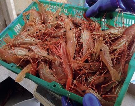 MONTECRISTO: Organic Ocean Seafood