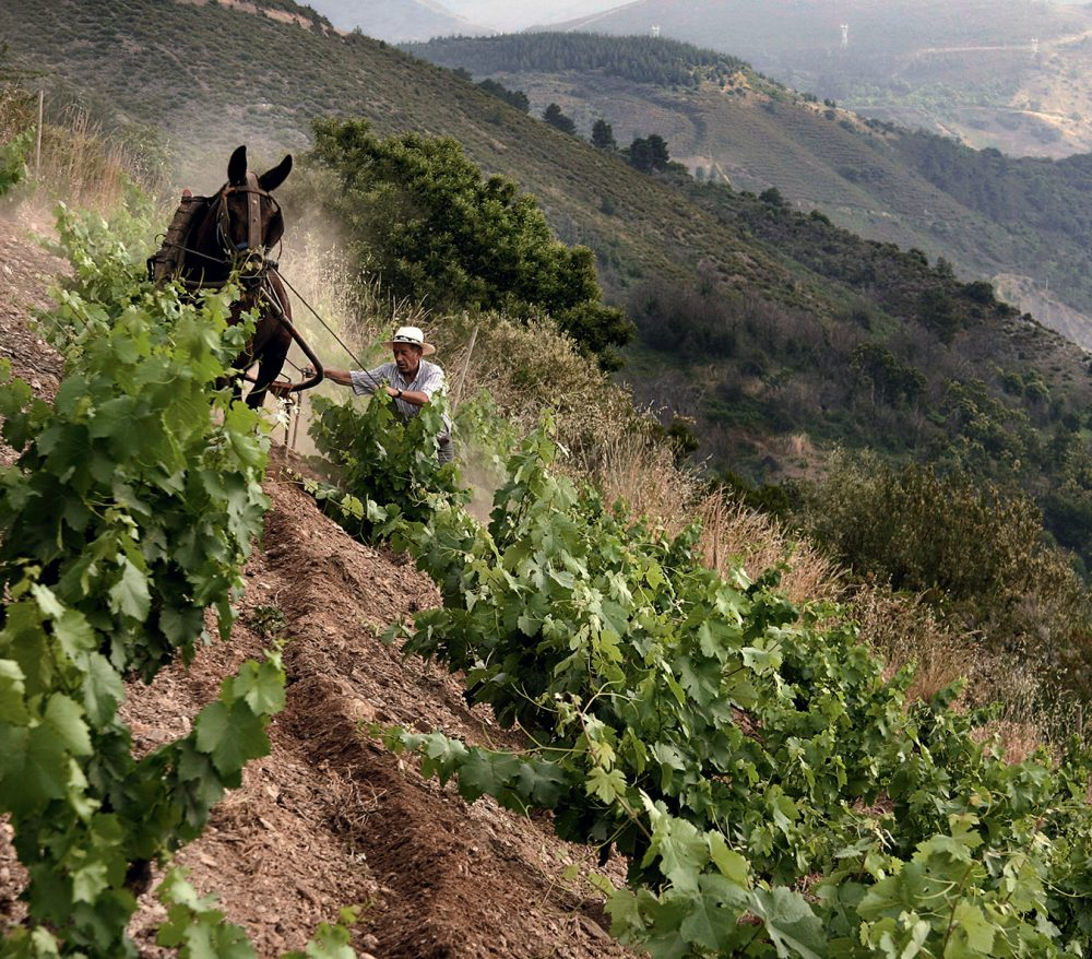 A Modern Pilgrimage Through Spain's Wine Country