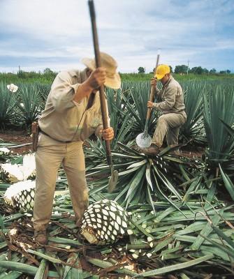 MONTECRISTO: Tequila