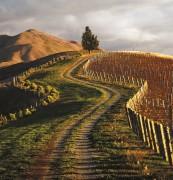 MONTECRISTO: Marlborough, New Zealand