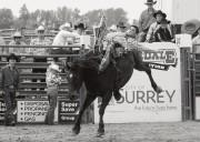 MONTECRISTO: Cloverdale Rodeo