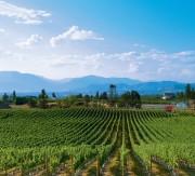 MONTECRISTO Magazine: SpierHead Winery
