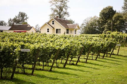 MONTECRISTO Blog: Wine Tours in Langley