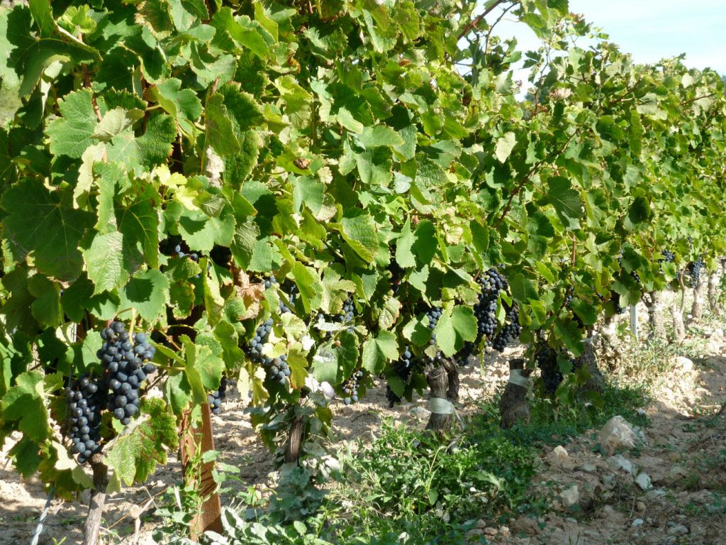 The Fine Wines of Vaucluse