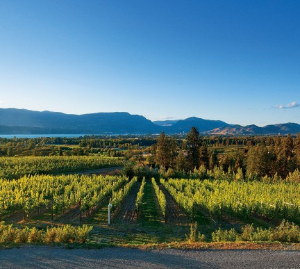 MONTECRISTO Magazine: Tantalus Vineyards