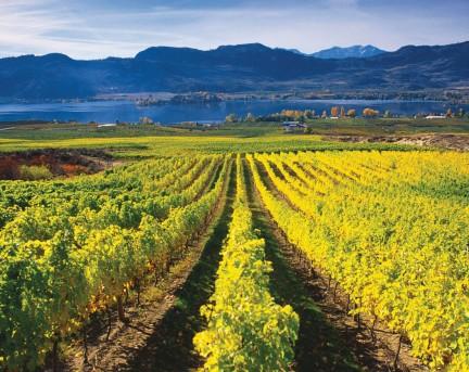 MONTECRISTO Magazine: Mission Hill Winery Cropped