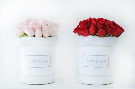 MONTECRISTO Blog: Landeau Roses