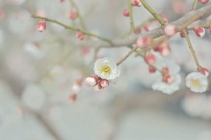 MONTE Blog: White Day