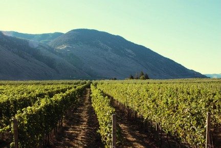 MONTECRISTO Magazine Spring 2015: Local Wine Orofino Winery