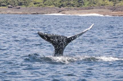 MONTECRISTO Blogs: Whale Watching
