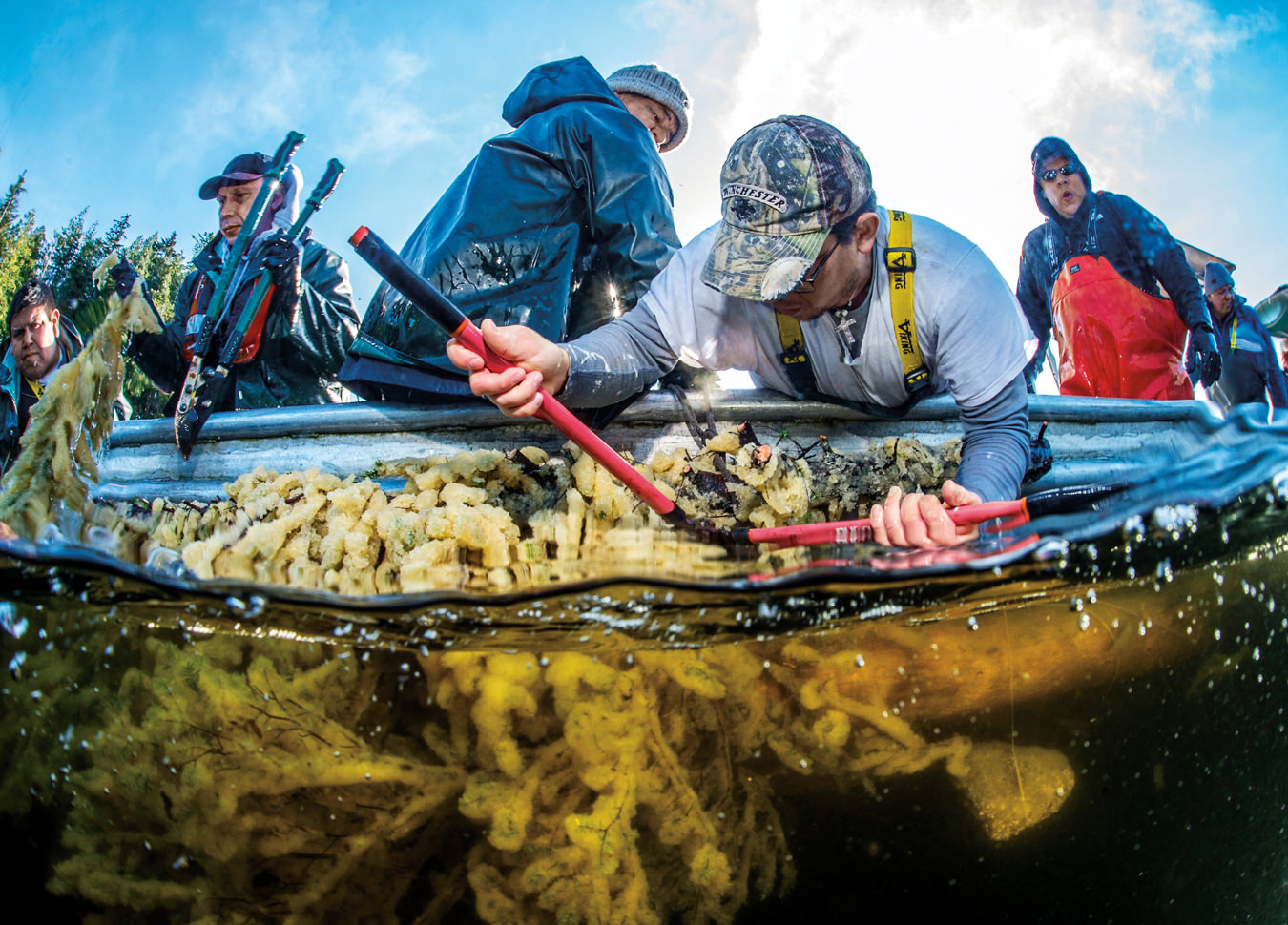 MONTE Summer 15: Herring Spawn on Kelp