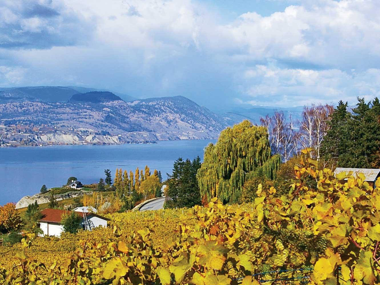MONTE Autumn 15: Foxtrot Vineyards