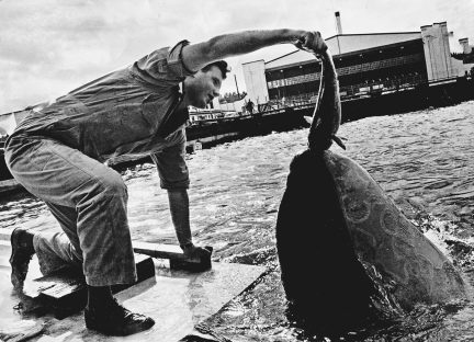 10 - As Soon as Orcas Were Displayed in Marine Parks in 1965 copy