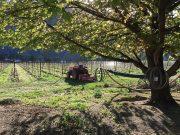 little farm winery