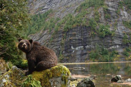 """Great Bear Wild"" by Ian McAllister"