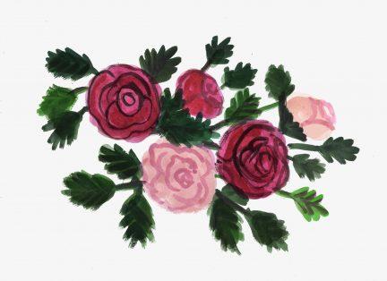 Stanley Park roses