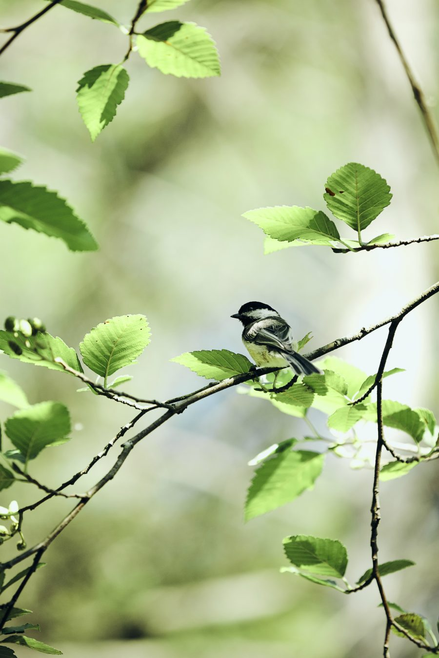 birdwatching in the lower mainland