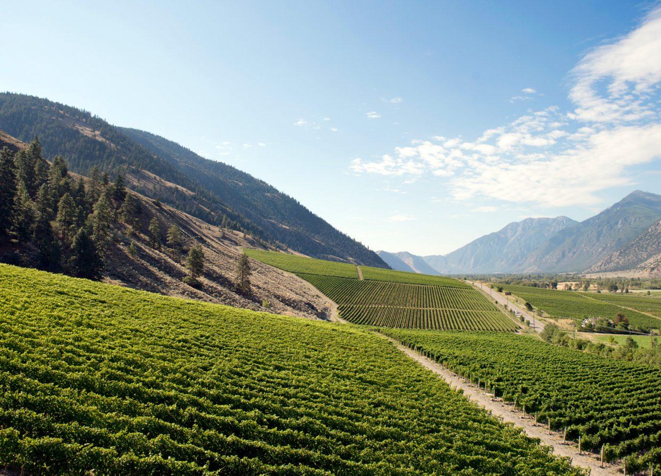vanessa vineyard