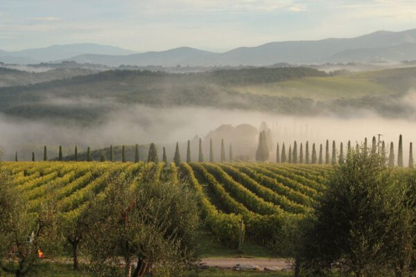 A Guide to Italy's Unmissable Wines