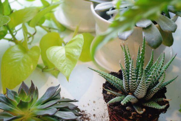 Foliosa Indoor Plant Workshops