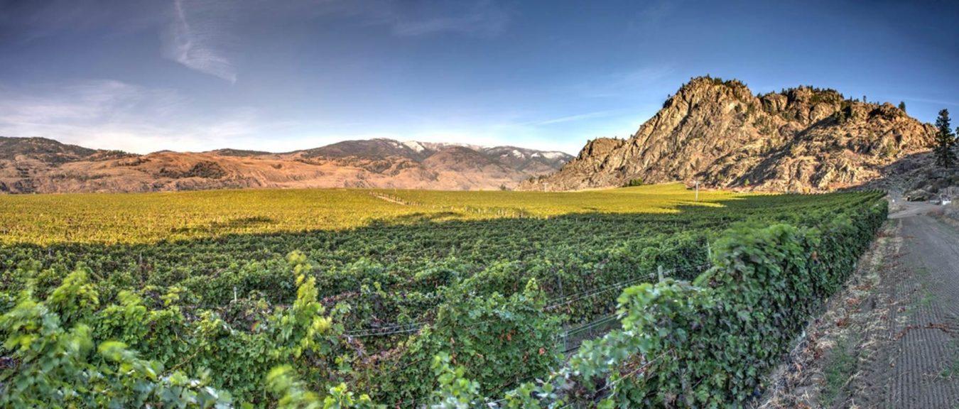 Sunrock Vineyards