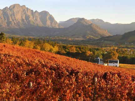 South Africa's Cape Winelands