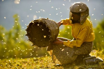 Honeyland documentary