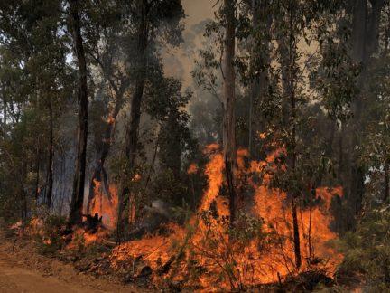Australia fires 2020