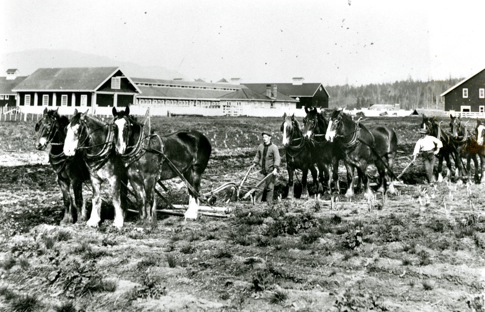 Workers at Colony Farm, 1913